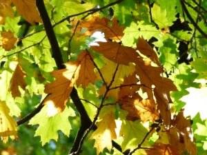 bos-bladeren